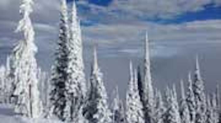 Content Dam Diq Online Articles 2015 03 Montana Trees Stacey Article Thumbnail