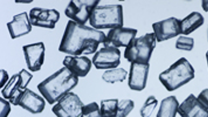 Granulated sugar viewed under our microscope
