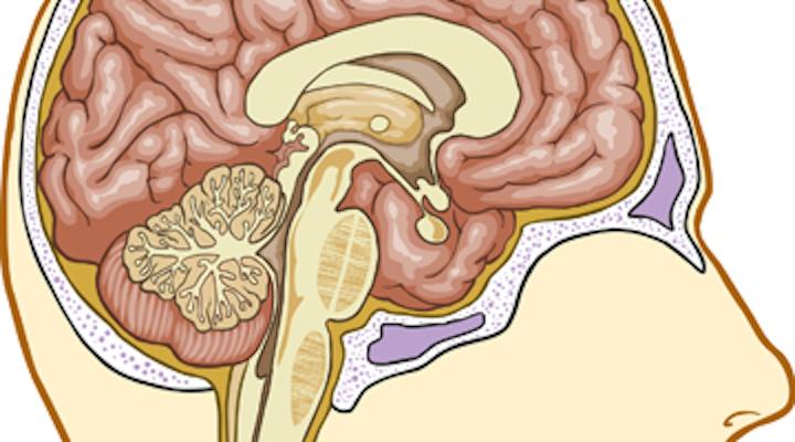 Content Dam Diq Online Articles 2015 07 Brain Stem 360 200