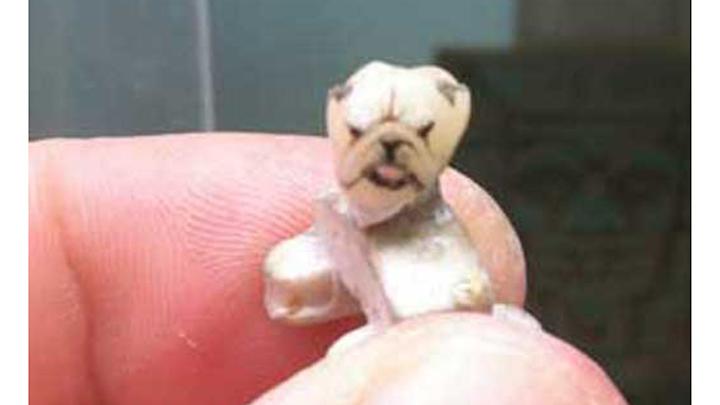 Dog Tooth Tattoo