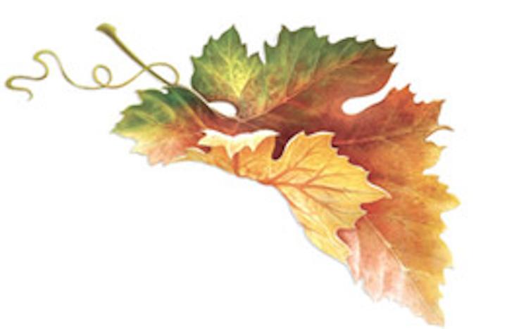 Leaf Fo