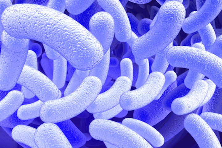 Microbes Dreamstime For Web