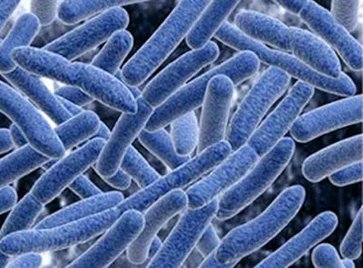 bacteria oral sex Oral