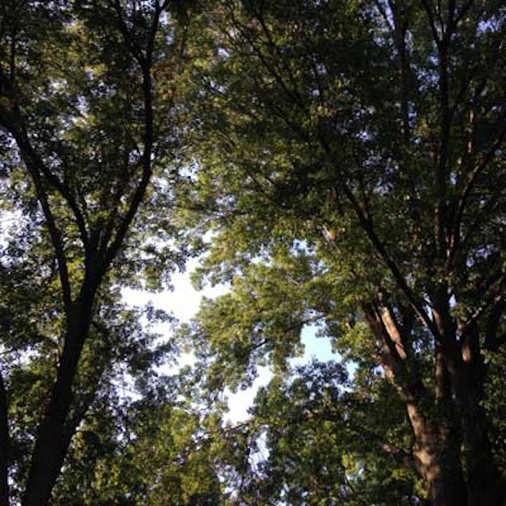 Treeswithsunlight Vickicheeseman