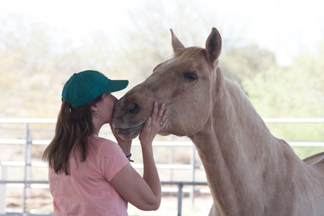 Stress in the dental profession and why a horse could save your life