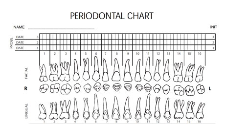 photograph regarding Printable Dental Charting Forms identified as Downloadable styles: Periodontal charting type DentistryIQ