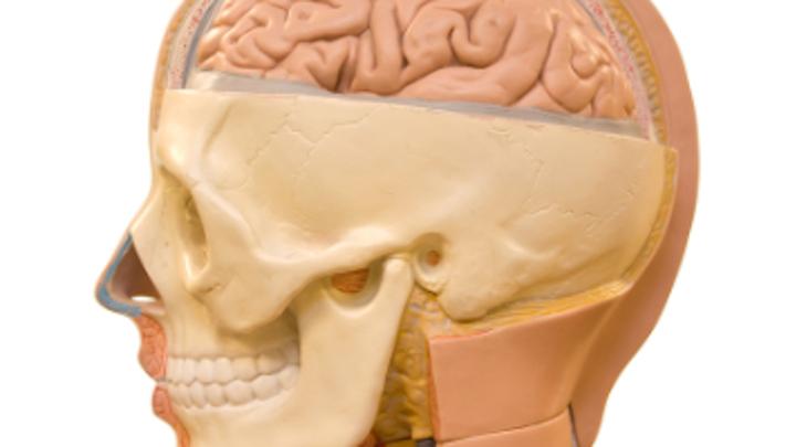 Content Dam Diq Online Articles 2016 10 Human Brain Thumb
