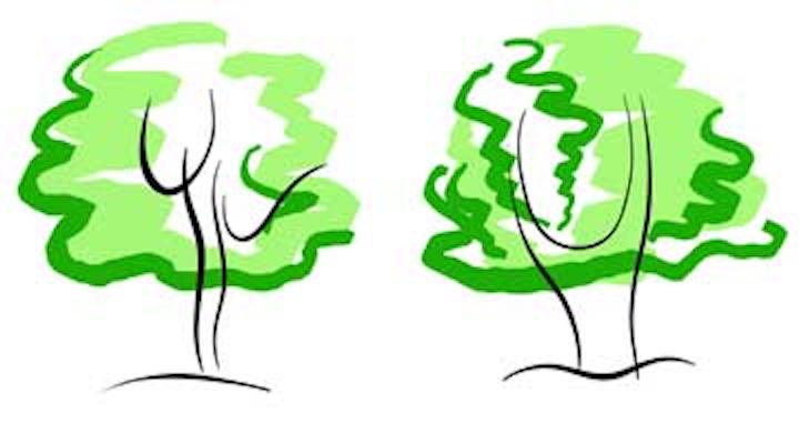 Content Dam De Online Articles 2015 10 Nagelberg Blog1 Trees Dreamstime Article Thumbnail